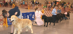 2014 LKC All Breed Dog Show