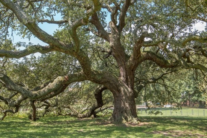Only in Your State named the Emancipation Oak a must see wonder in Virginia